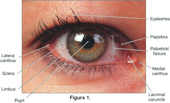 Blepharitis Symptoms Causes And Cures